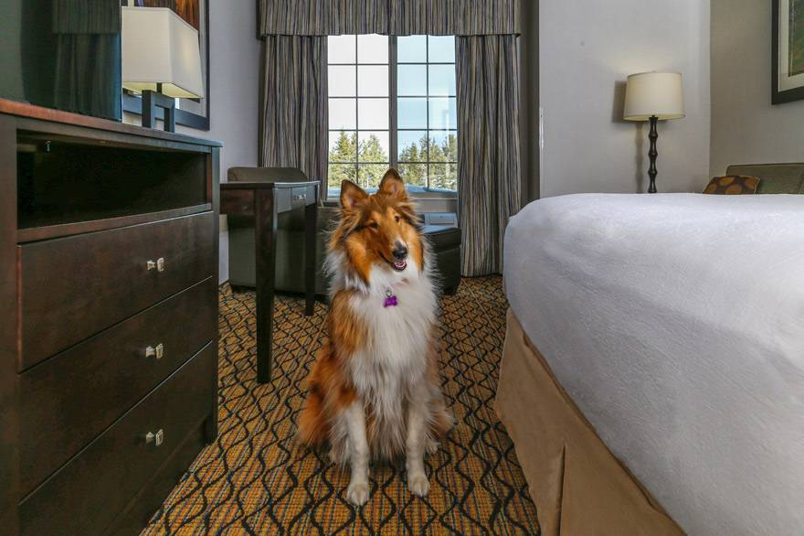 Pet friendly lodging in West Yellowstone, MT