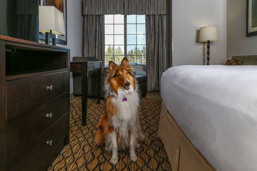 Holiday Inn West Yellowstone pet friendly rooms