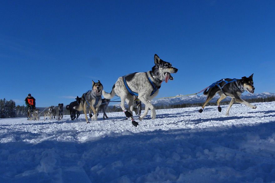 Yellowstone Winter Dog Sledding