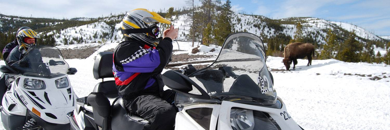 Yellowstone snowmobiler taking a picture of a buffalo bison