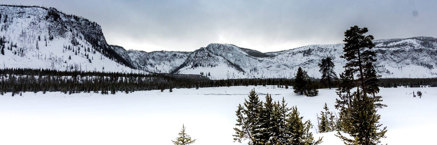 Scenic drives through Yellowstone National Park in winter
