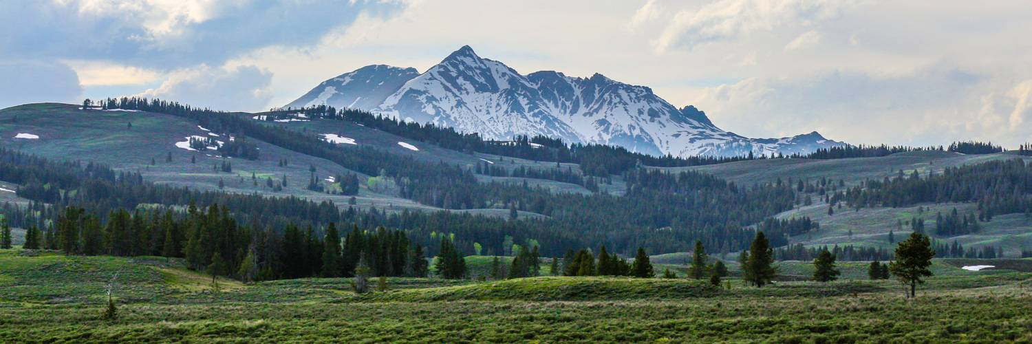 Yellowstone snow covered mountains and wide range of trees