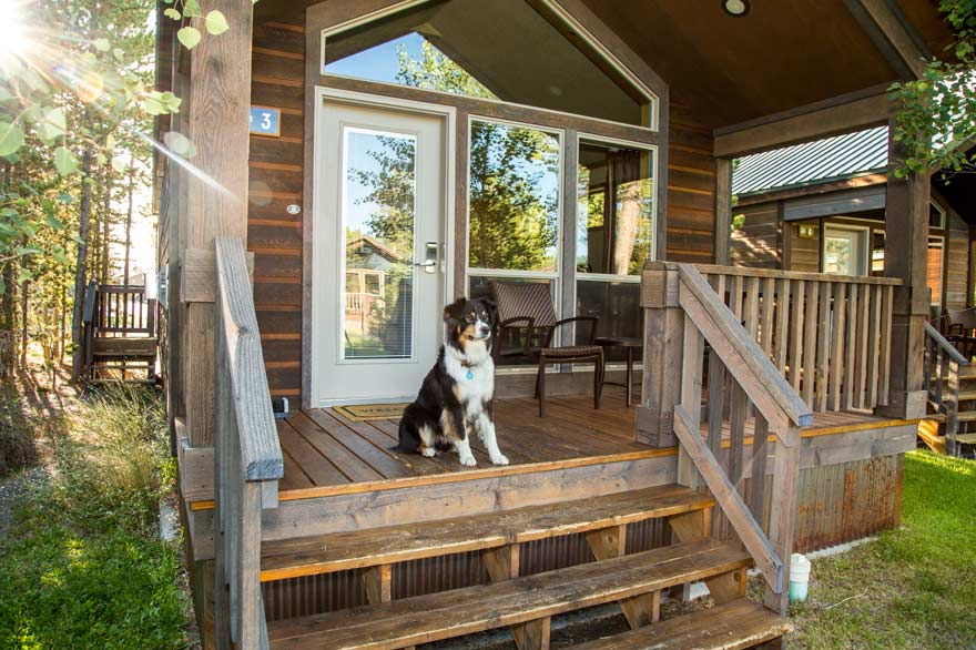 Dog sitting outside Yellowstone's pet friendly cabins