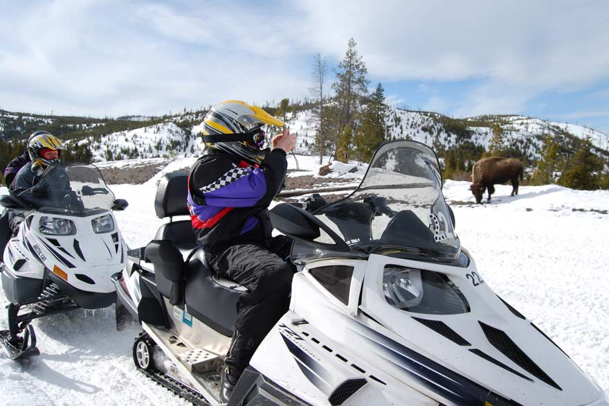 Snowmobilers stopping to take picture of buffalo bison inside Yellowstone National Park