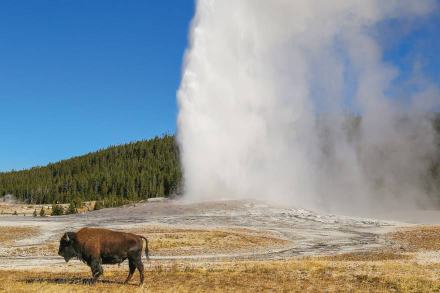 Yellowstone Summer Activities